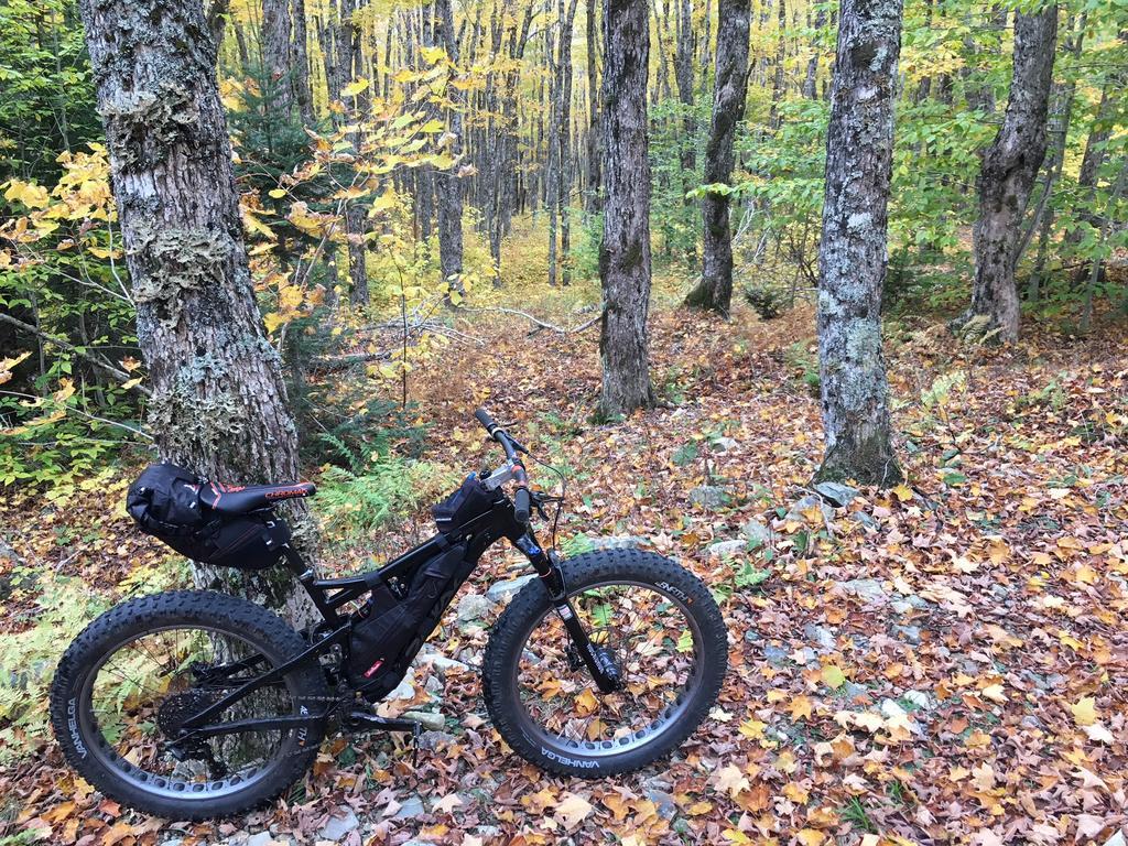Daily fatbike pic thread-maplegrove2.jpg