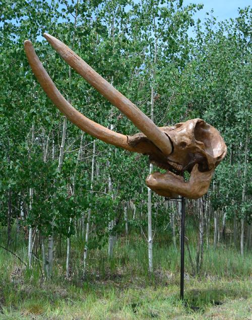 Manitou Mastodon?-mastodon_skull.jpg