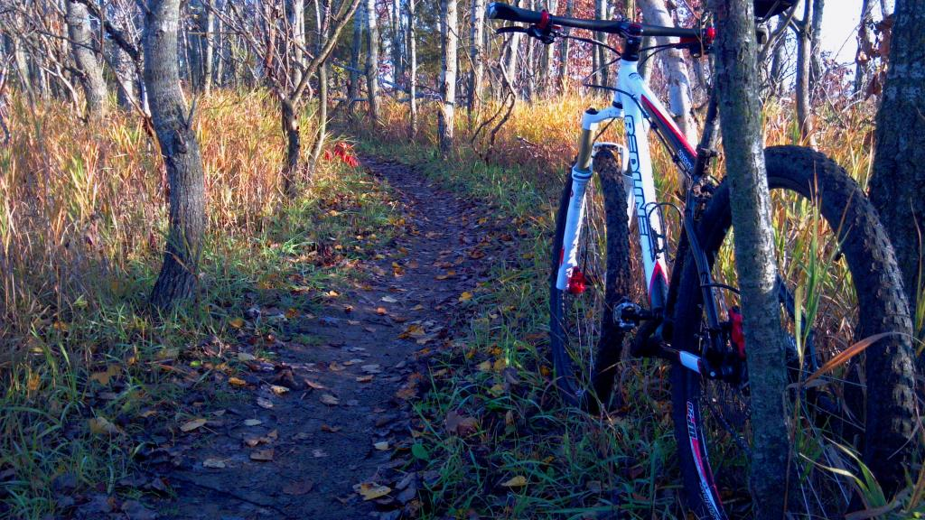 29ers In The Fall-mb2.jpg