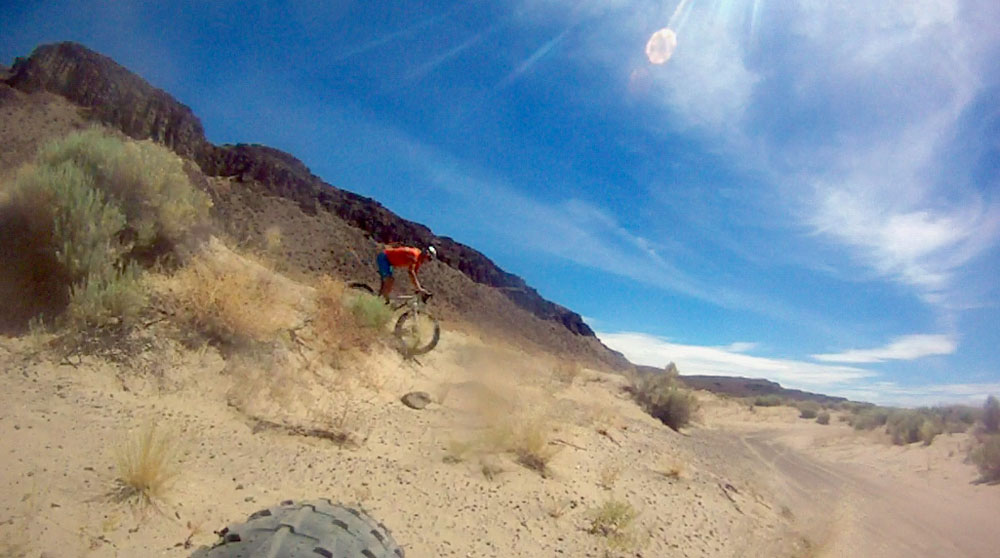 Puffin in the desert sand [O]-mb4.jpg