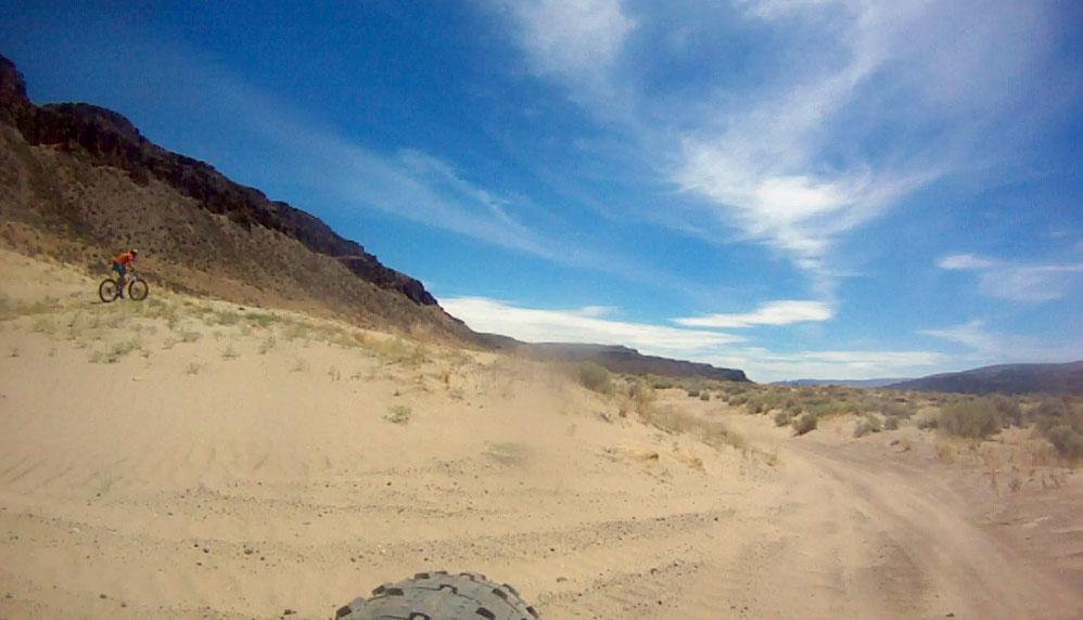 Puffin in the desert sand [O]-mb5.jpg
