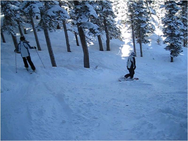Ski or MTB?!?!  Tough Choices-michellekristinloreleitrees.jpg