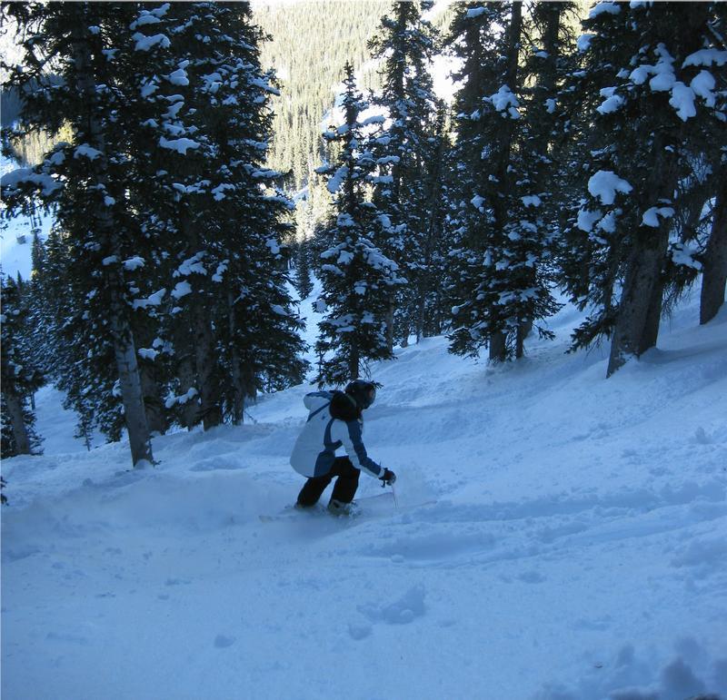 Ski or MTB?!?!  Tough Choices-michellewestblitztrees.jpg