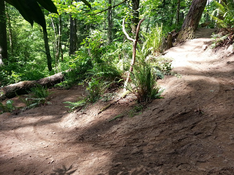 St. Edward State Park - Pipeline Trail Work Parties-middle-swithcback.jpg