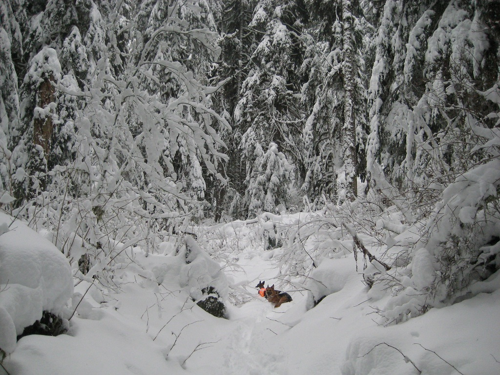 snow day pics-middlefork_hike-029b.jpg