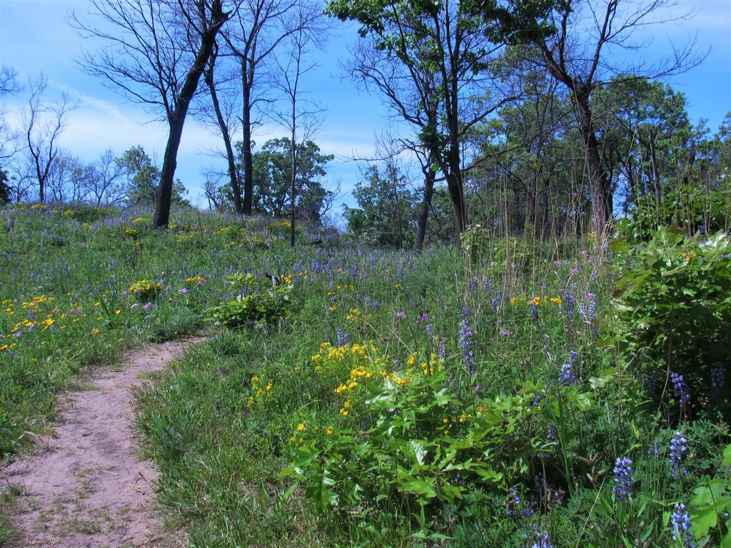 Botany Thread-miller-woods-4-.jpg