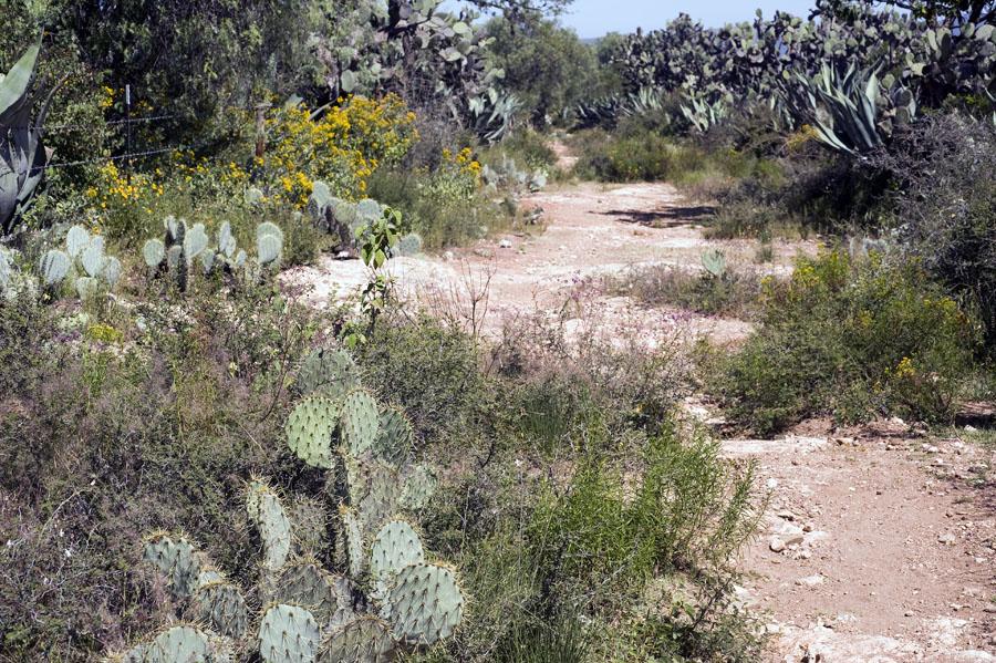 Trail Pics-mineraldepozostrail.jpg