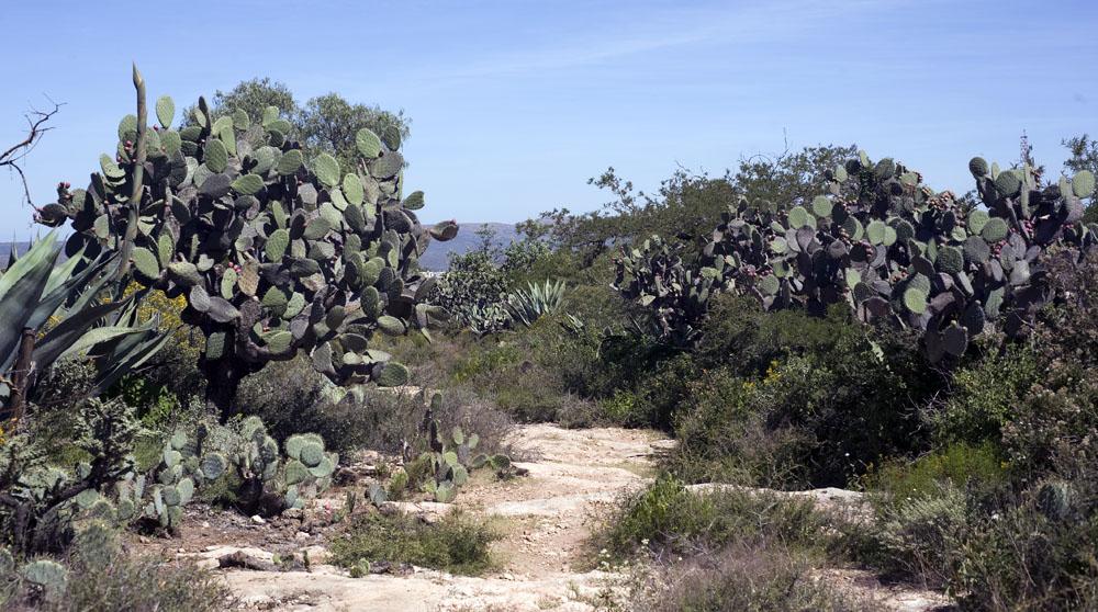 Trail Pics-mineraldepozostrail2.jpg