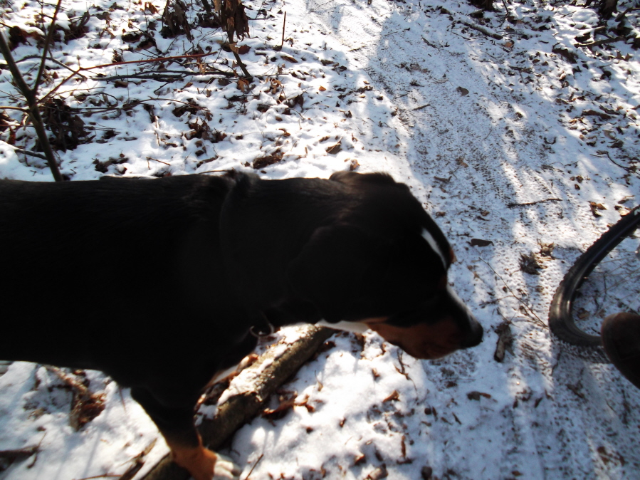 Roda da mOOn, Evansville Snow X and Ice at Briar Creek, Sunday 1/16/12-mlp-sun-ride-1-16-12-008_900x900.jpg