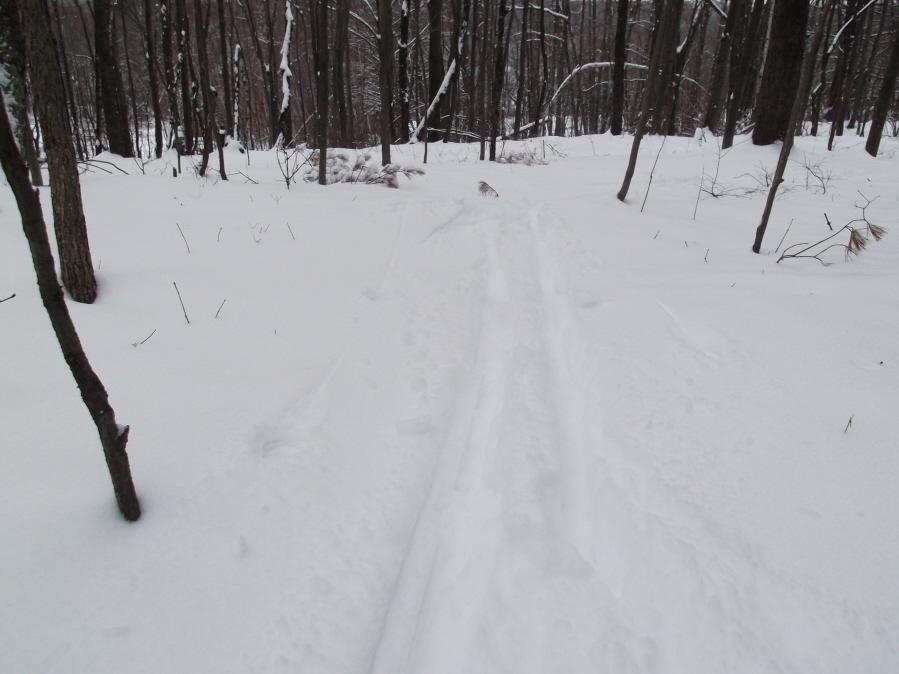 Anyone else enjoy the snow today?-mlp-xc-ski-1-21-12-007_900x900.jpg
