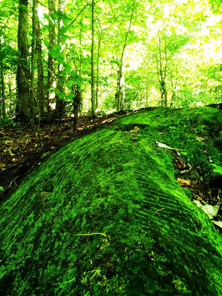 Trail maintenance passion-moldyresize.jpg