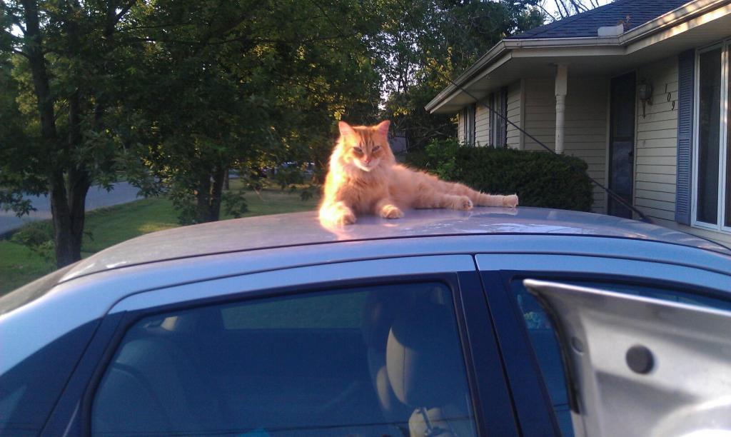 Cat Passion (here kittie, kittie, my new best friend...) Post your cat photos.-momopic.jpg