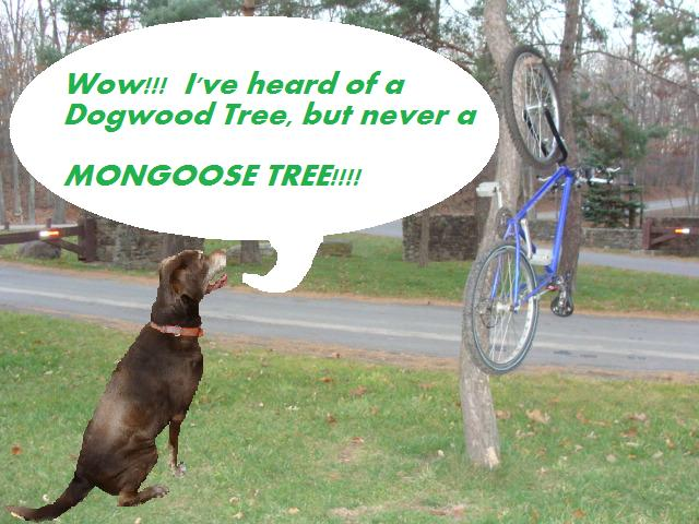 Wednesday night ride at the Moon-mongoosetree.jpg