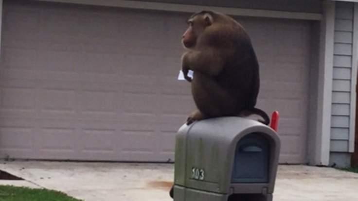 Weird and Wacky News-monkey1-1-736x414.jpg