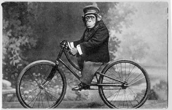 2013 Surly Karate Monkey or 2014 Kona Unit for a Clyde?-monkey_on_bicycle_vintage_121675737.jpg