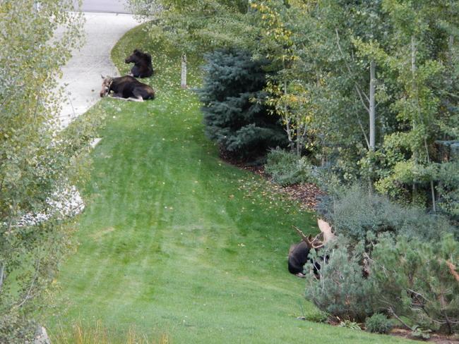 animal encounters-moose-yard-family-resize.jpg