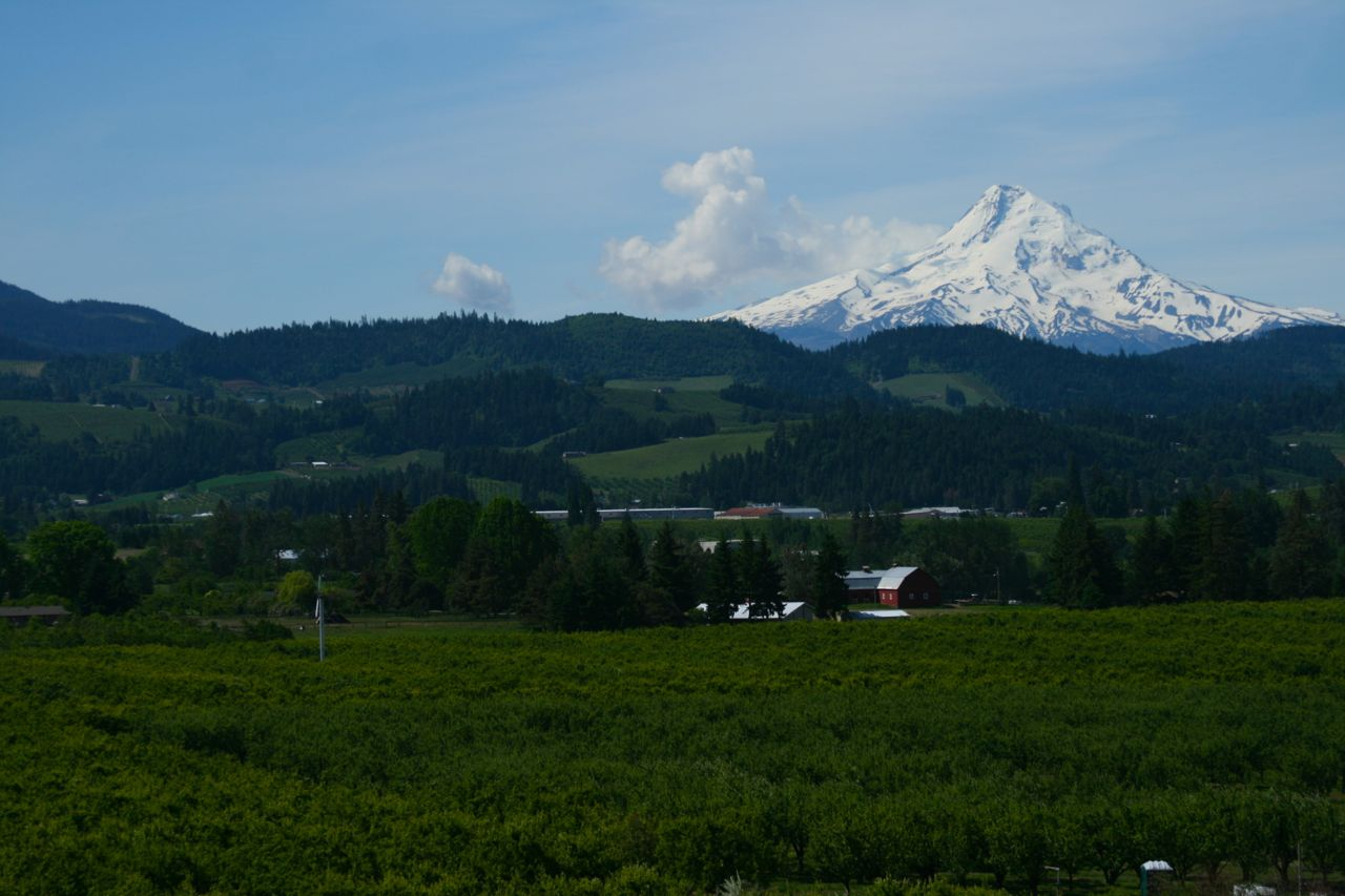 The 11,239 foot-high Mount Hood towers above the lush orchards outside Hood River.
