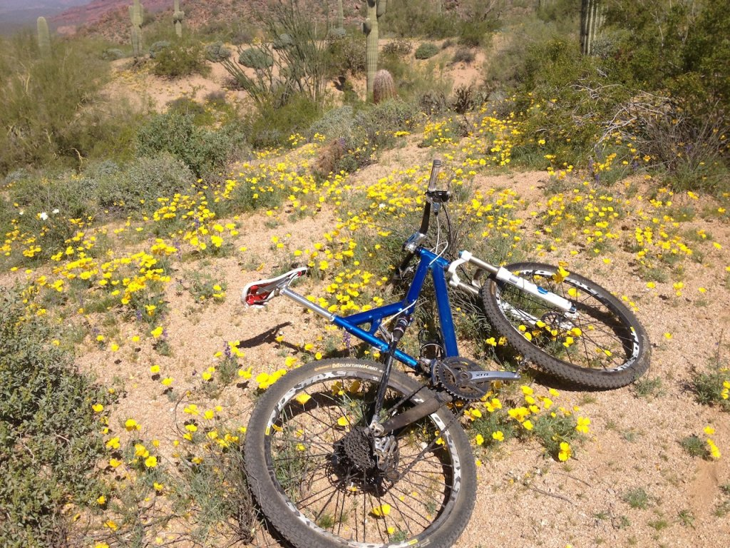Old school asr-sl question-mountain-bike-flowers.jpg