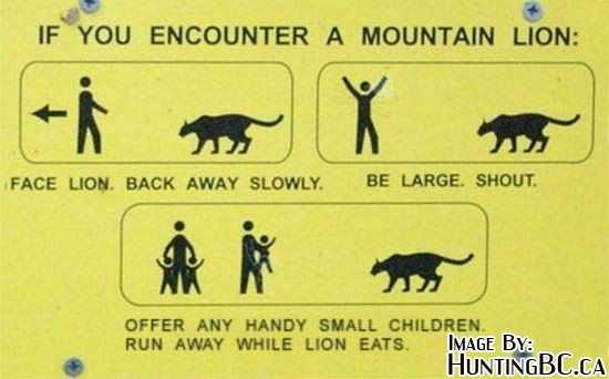 Mountain lions in foothills?-mountain_lion_encounter.jpg
