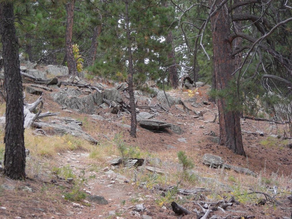 Current Black Hills Trail conditions (March 13-20)...-mtbr-1.jpg