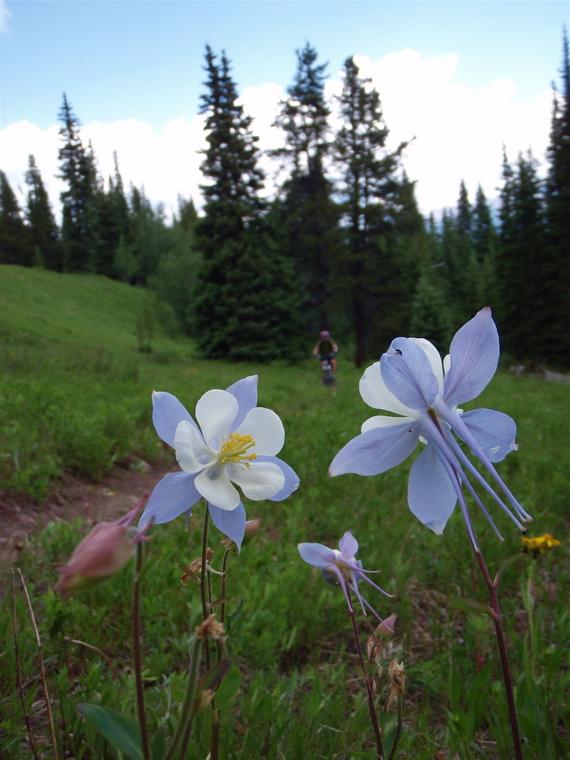 Crested Butte in the Summertime-mtbr10.jpg
