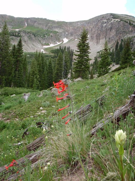 Crested Butte in the Summertime-mtbr12.jpg