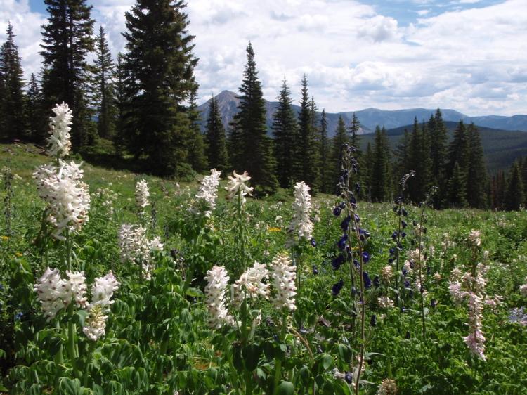 Crested Butte in the Summertime-mtbr31.jpg