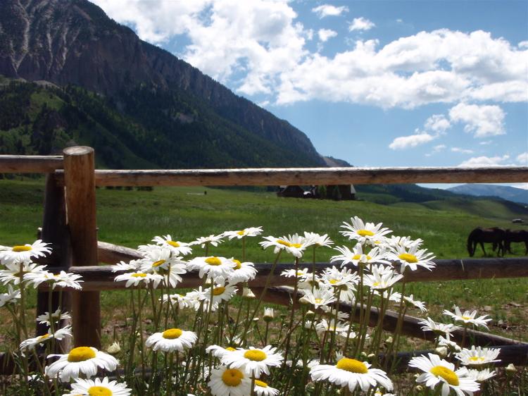 Crested Butte in the Summertime-mtbr49.jpg