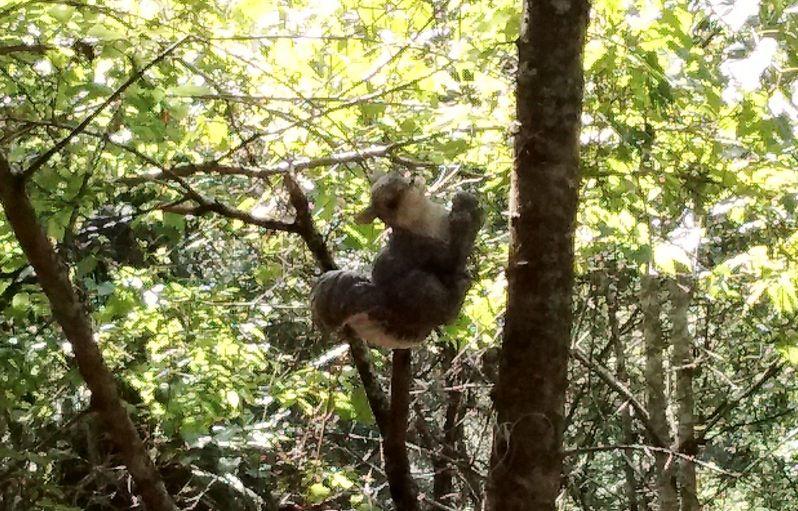 Forest Bandit Animal