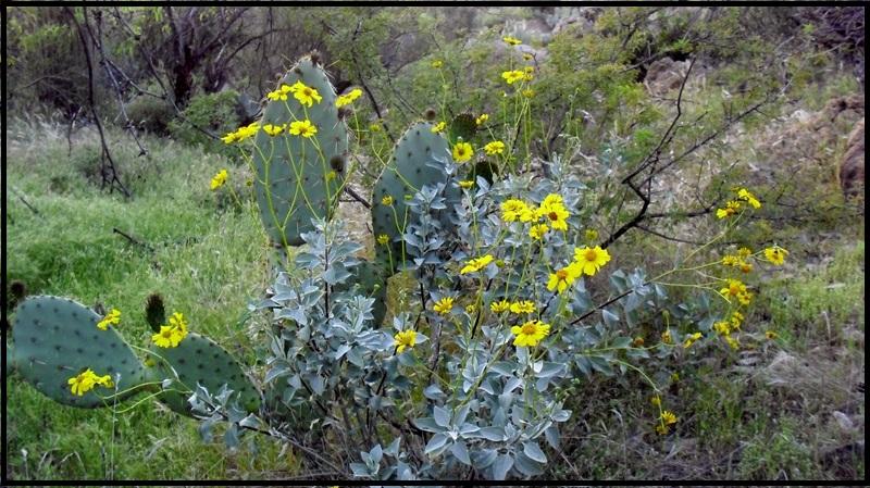 Arizona Trail-mtbr_02.jpg