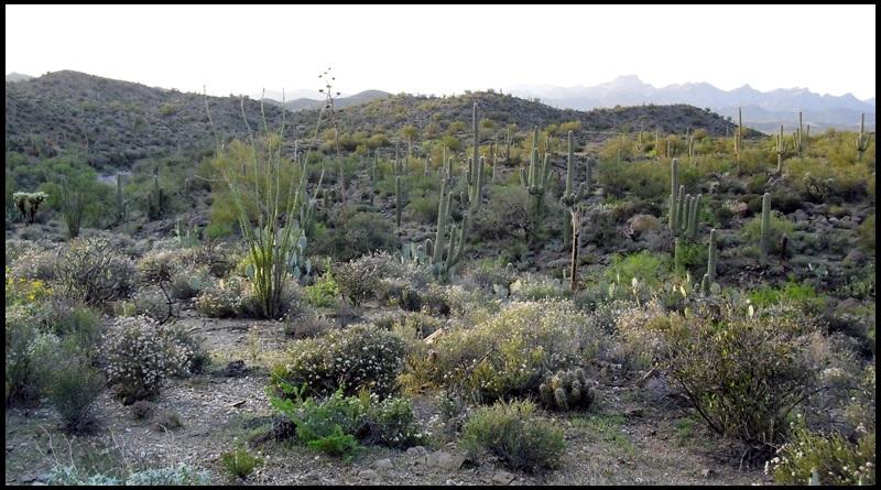 Arizona Trail-mtbr_05.jpg