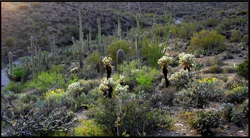 Arizona Trail-mtbr_07.jpg