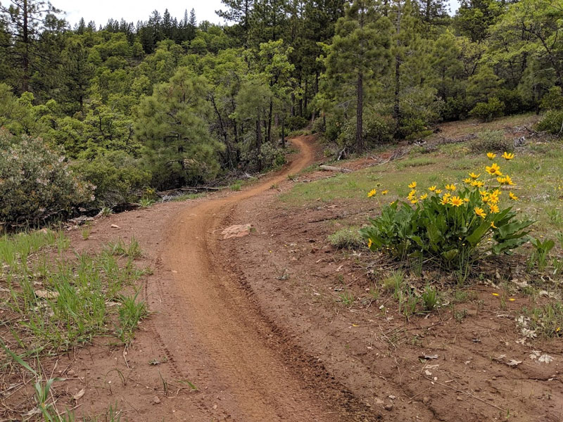 Too Early? Downieville/Graeagle conditions 2019-mthough-primo.jpg