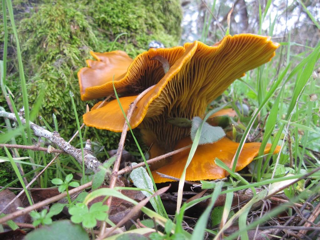 Photo Assignment: Shrooms Along the Trail-mushroom3.jpg