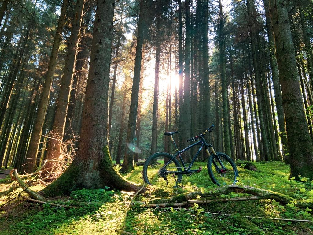 Post your 26er Pics-my-bike-woods.jpg