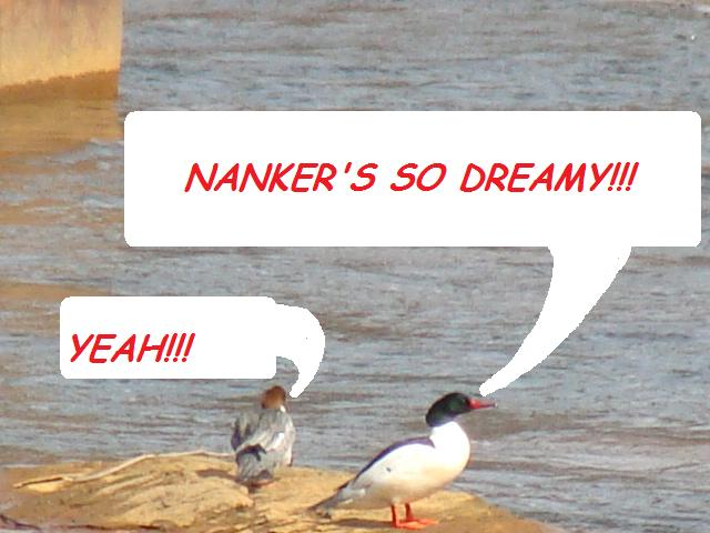 Sunday 3-21-nanker_dreamy.jpg