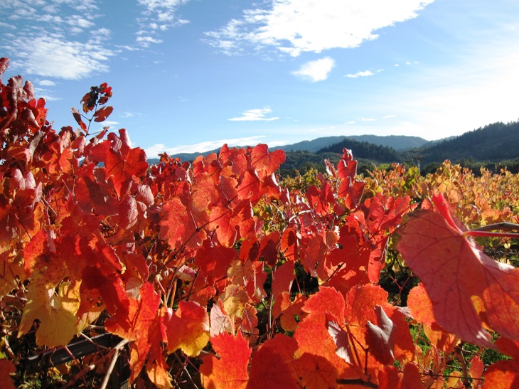 Assignment: Norcal Fall Photos-napa.jpg