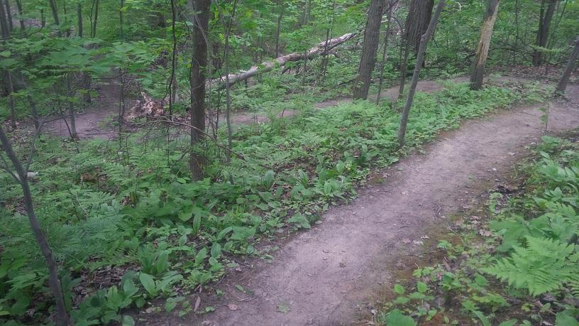 Sudbury - Giving some love to Walden MBC / Naughton Trails-naughton_1.jpg