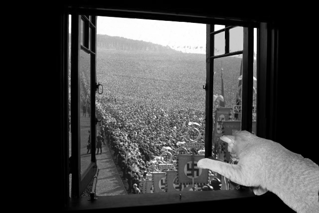 When Animals Attack Thread-nazi-kitty.png