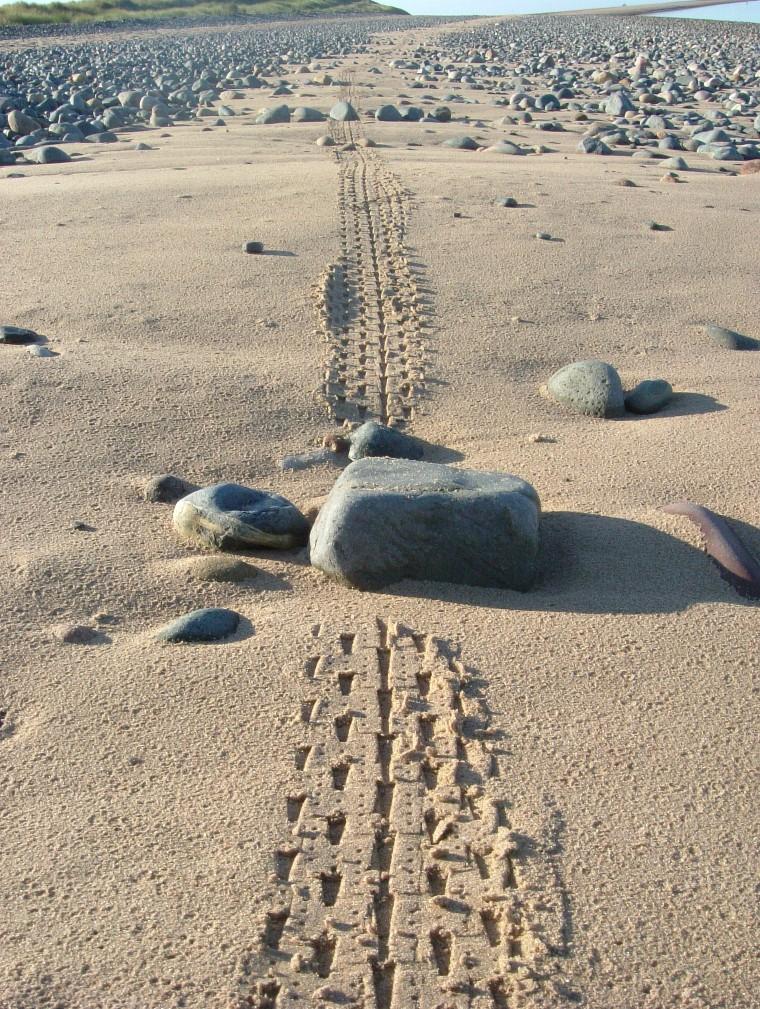 Beach/Sand riding picture thread.-ne14.jpg