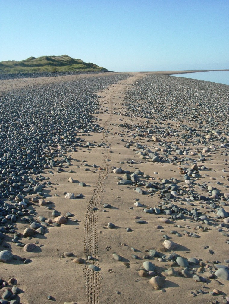 Beach/Sand riding picture thread.-ne16.jpg