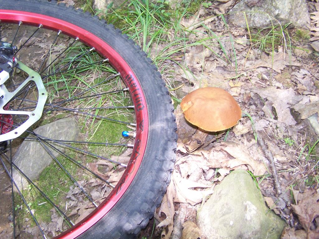 Mushrooms....Post your pics...-nepaug-ride-july-2012-039.jpg