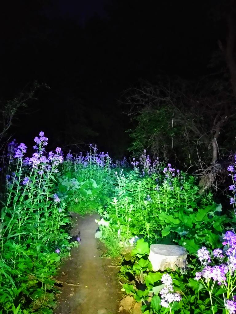 Night Riding Photos Thread-night-flowers.jpg