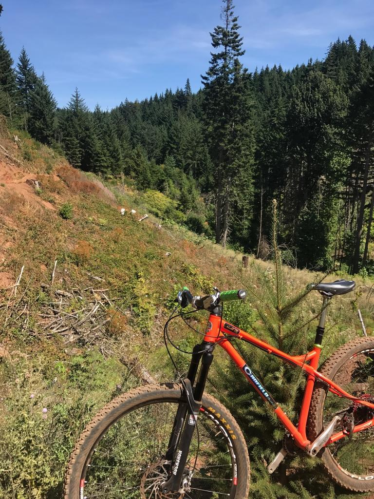 The All Mountain Hardtail Thread. Post up yours.-nimble-9-2.jpg
