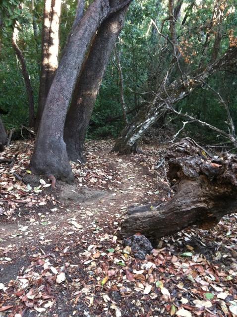 Shorts on the Ridge-nisene-december-13-010.jpg