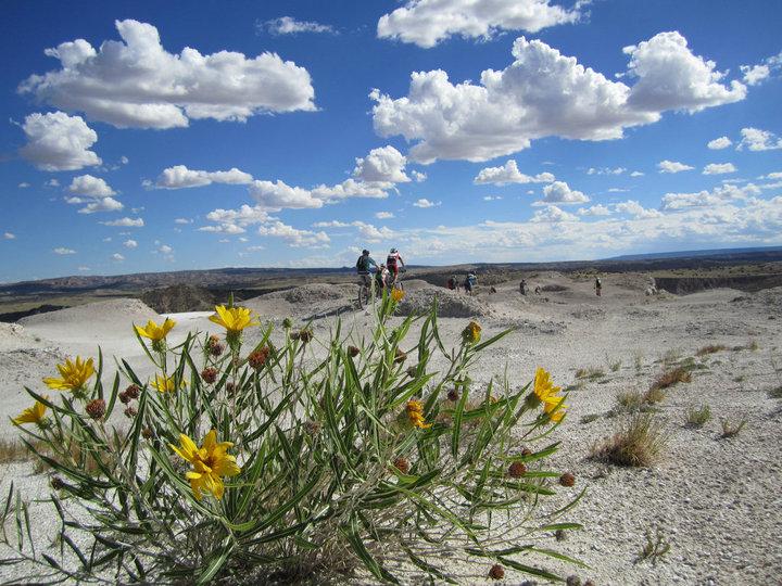 The NM Trail Pix Thread-nm_whitemesaflowers.jpg