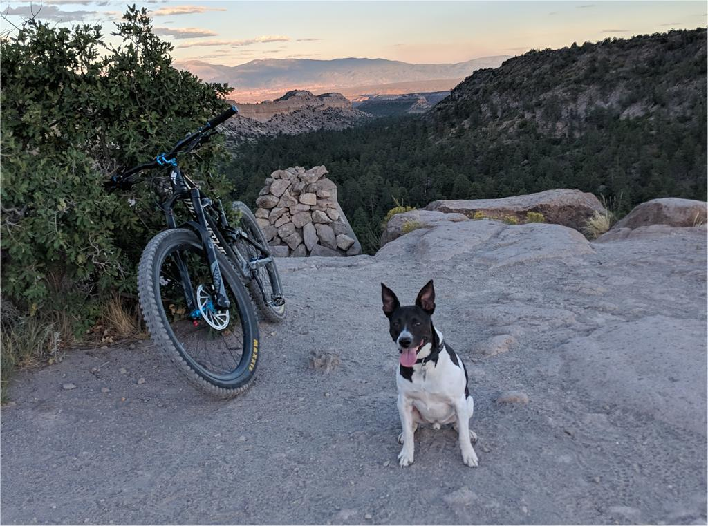 Trail Dogs...-norco.jpg