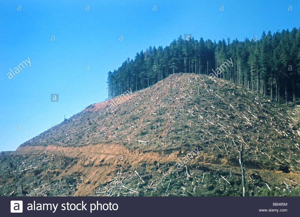 Mountain Bikers Seek to Gut Wilderness Act-north-america-usa-washington-olympic-peninsula-clear-cut-bb485m.jpg