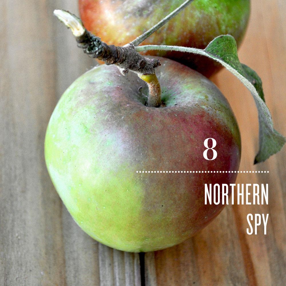 Vegetarian and Vegan Passion-northern-spy_0.jpg