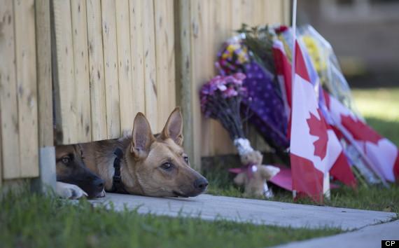 Canada being attacked!-o-cirillo-dogs-1-570.jpg